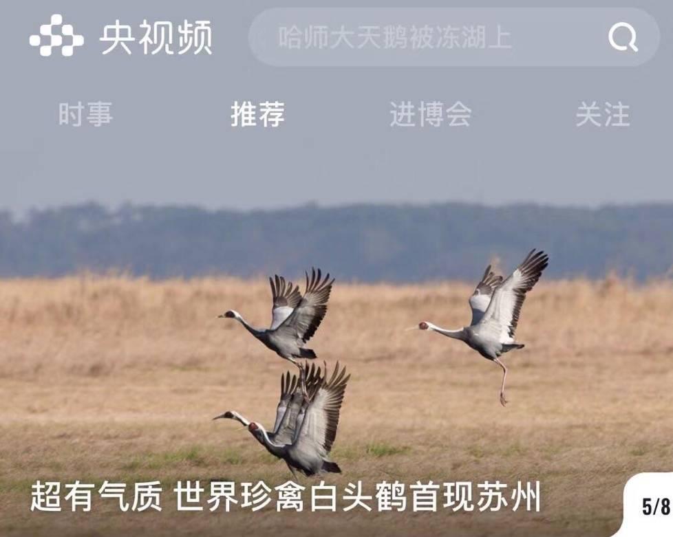 """首個國家級""""5G新媒體平臺""""上線 蘇州的這只鳥""""C位亮相"""" 作者: 來源:看蘇州"""